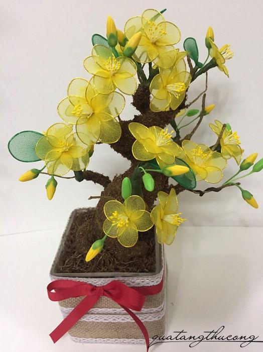 Kết quả hình ảnh cho hoa mai voan